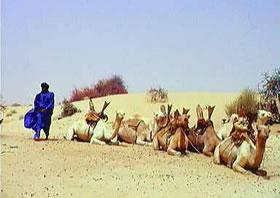 Camel ride to Timbuktu