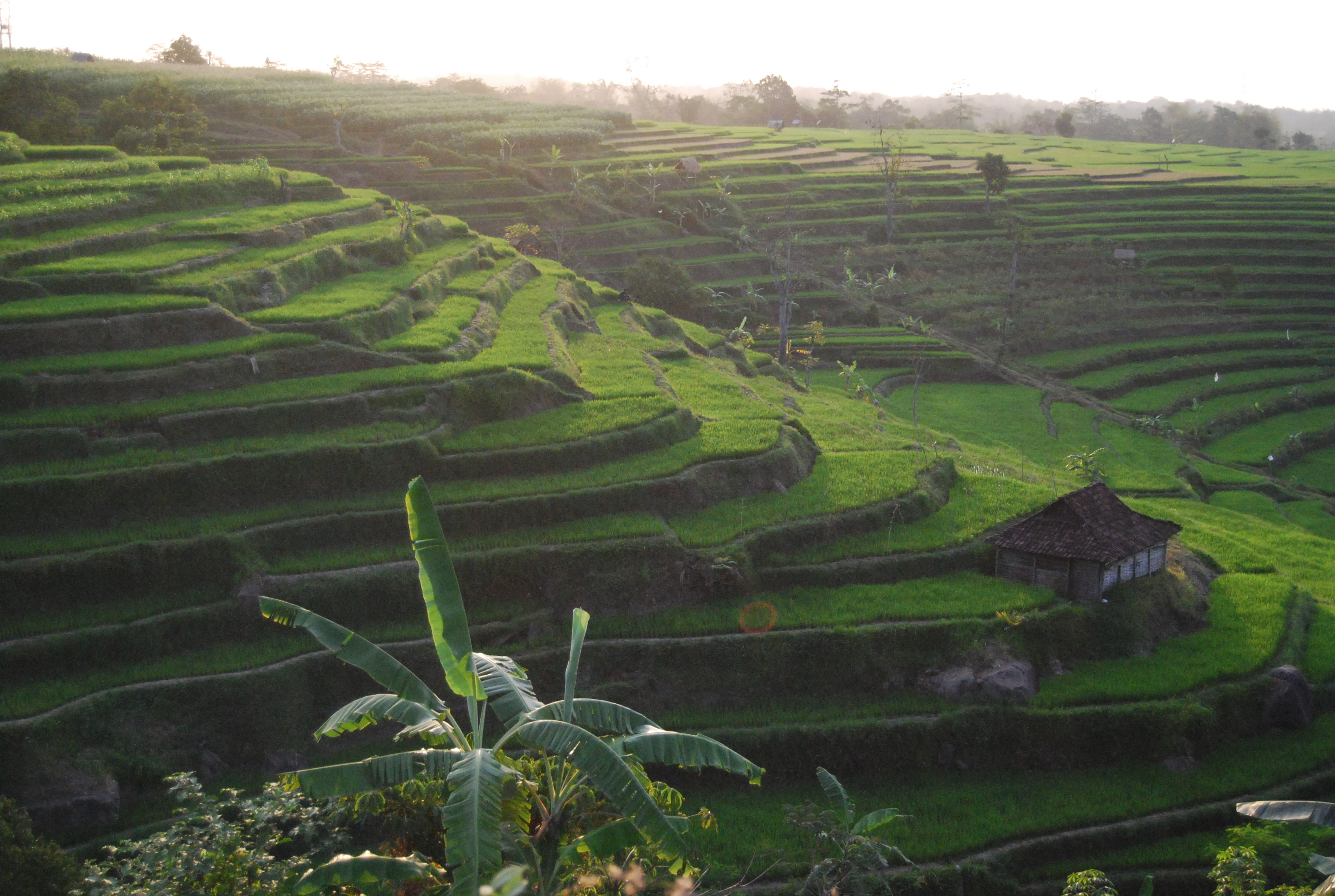 Tim Hannigan - The History Archipelago Travels in Search of Indonesia's Past 1