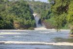 David Redford - Murchison Falls